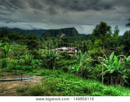 Wonderful landscape of the lush and abundant Amazonian forest of Ecuador