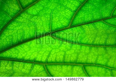Green leaf texture abstract background. Natural pattern