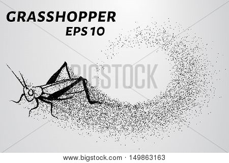 Grasshopper of particles. Silhouette grasshopper is of little circles.