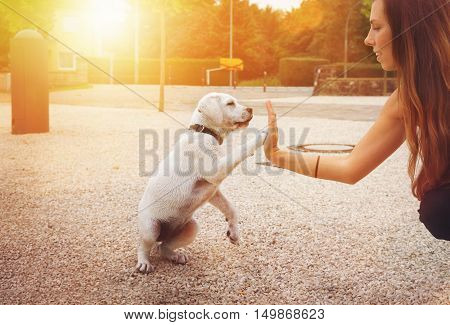 cute little labrador dog puppy giving a young woman a handshake - High Five