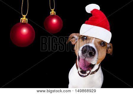Christmas Santa Claus Dog Isolated On Black