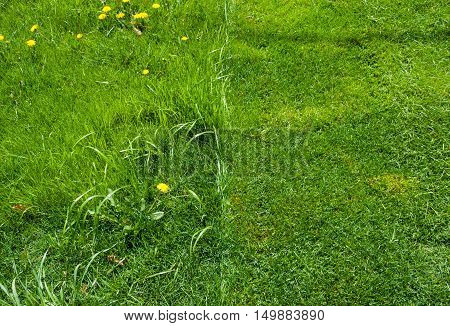 Detail of fresh green grass lawn half recently mowed half uncut viewed from above.