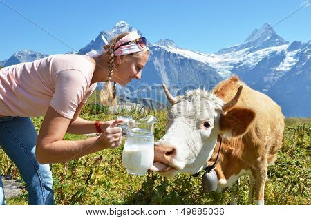 Girl with a jug of milk and a cow. Jungfrau region, Switzerland