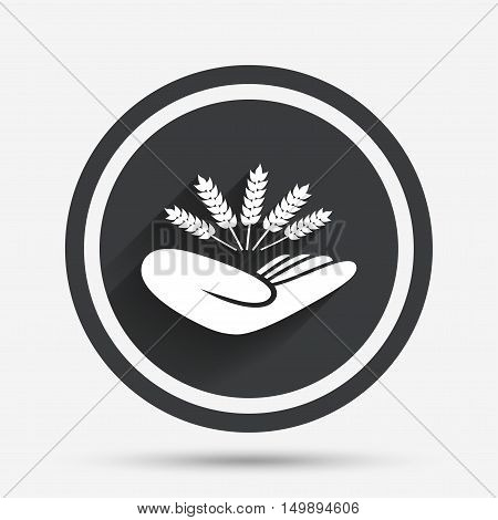 Agriculture insurance sign icon. Hand holds wheat. Protection against crop failure and drought. Circle flat button with shadow and border. Vector