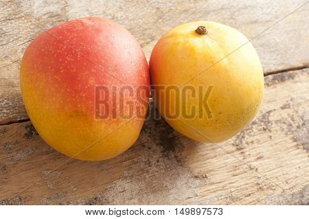 Two fresh whole sweet tropical mangoes for an exotic dessert on a rustic wooden table