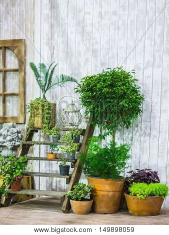 Potted Plants In Front Of Cozy Home.