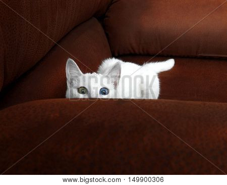 kitty waiting to jump and hiding on a sofa
