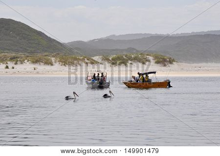 WALPOLE,WA,AUSTRALIA-SEPTEMBER 30,2014: Fishing boats with people and pelicans on the Walpole River and river mouth with dunes in Walpole, Western Australia.