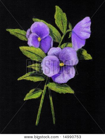 Color Pencil Drawing of Purple Pansies