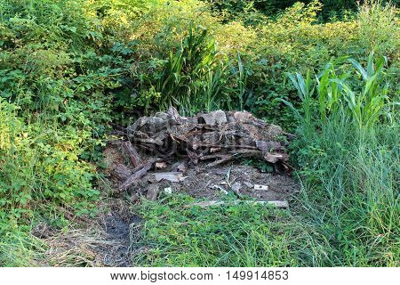 Burned garbage left in small pile in thick fresh green forest surrounding on a warm sunny day