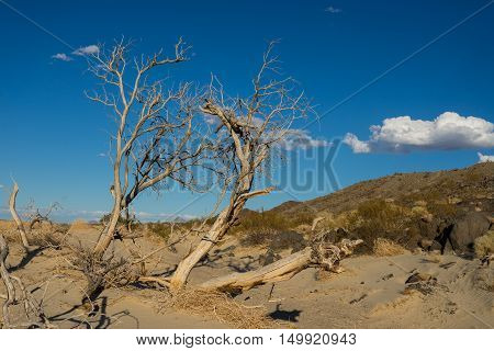 Dead tree leans over sandy wash in desert of southern California.