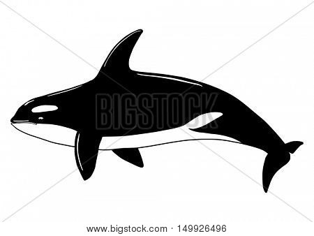 Vector - Killer Whale