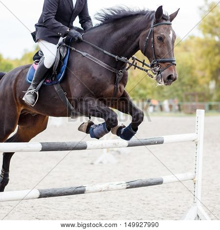 Show Jumping Close Up Image.