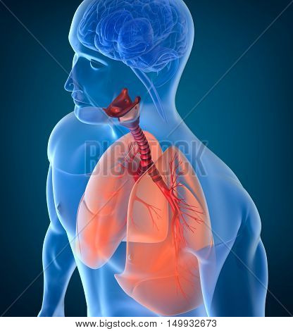 Anatomy of human respiratory system , 3D render