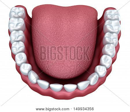 Human denture 3D image isolated on white