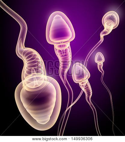 Sperm X-ray view . 3D genered image .