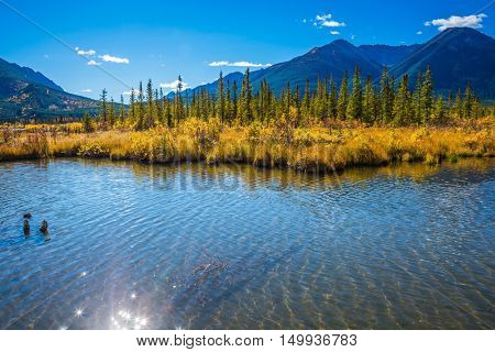 Concept of ecotourism. Beautiful Lake Vermilion in Banff National Park. The Canadian province of Alberta, the Rocky Mountains. Perfect sunny day