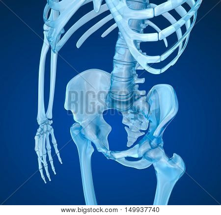 Human skeleton: pelvis and sacrum. Medically accurate 3D illustration