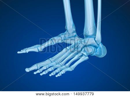 Human skeleton: skeletal foot. Medically accurate 3D illustration