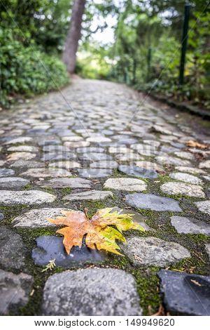 Jardin Des Plantes Park In Fall Season