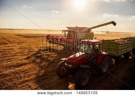 Harvesting The Wheat