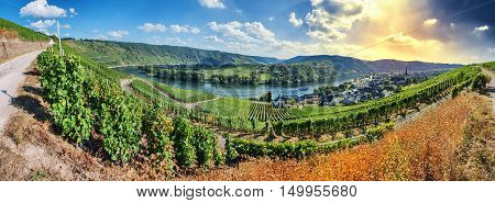 Panoramic landscape with autumn vineyards. Mosel Germany