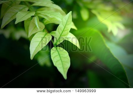 Buetiful green leaf background. green leaves on the green backgrounds