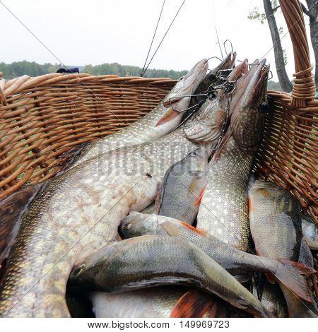 Fresh Catch