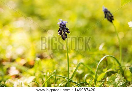 spring flower in a meadow  bloom, flores, season
