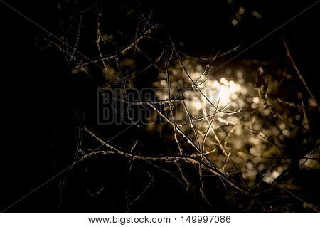 Dark vegetation background with distant light filtering through