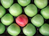 Apples granny smith and one gala apple laid out in a diagonal rows in a box at a grocery store for sale. Red apple among a group of green apples. Horizontal. Top view. Daylight. poster