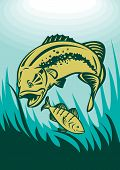 illustration of a largemouth bass preying on perch fish viewed underwater poster