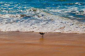 sea bird standing on a desert beach