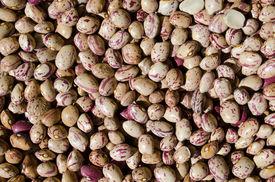 Painted Beans - Healthy Fiber Food