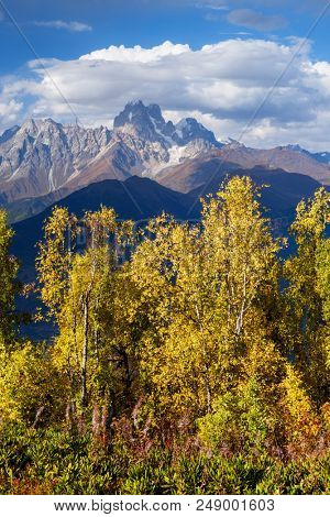 Autumn landscape. Top Ushba in clouds. Birch forest on the hillside. View from Mount Mkheer. Main Caucasian ridge. Zemo Svaneti, Georgia