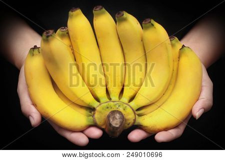 Ready Thai Traditional Fruit Served,ripe Lady Finger Banana,slim Yellow Bunch Of  Bananas,call Kluai