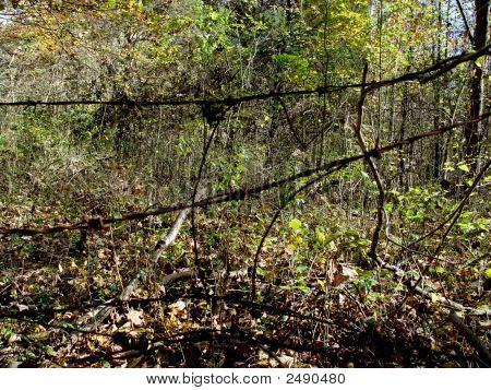 Wooded Landscape Dsc02084