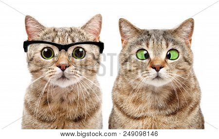 Portrait Two Cute Cats Image Photo Free Trial Bigstock