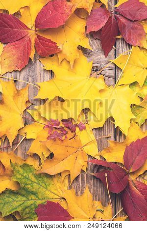 Autumn Background. Abstract Background Of Colorful Autumn Leaves. Fallen Leaves Over Rustic Wooden B