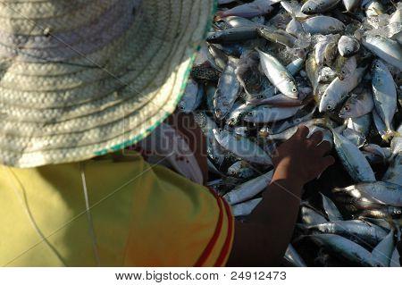 fish select
