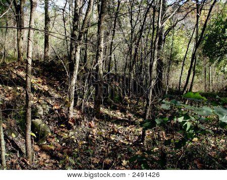 Wooded Landscape Dsc02087