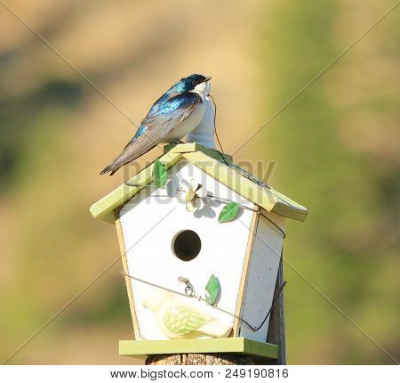 Blue Bird Hanging Out Front Of His Bird House