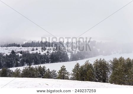 Foggy Mountain Landscape With Conifer Trees And Hills