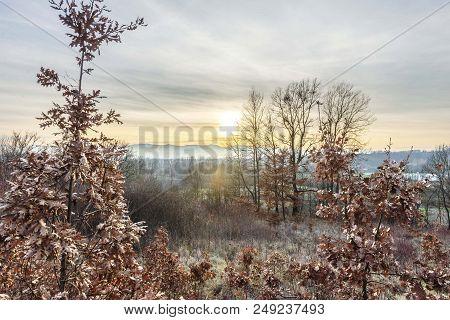 Scene Of Yule Log Tree Isolated In Woods