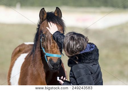 girl fondle red horse. girl and horse isolated poster