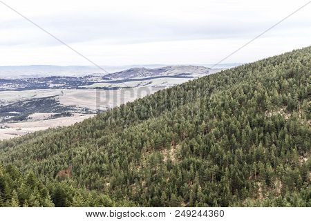 Mountain Wood Forest With Conifer Trees. Mountain Tree Landscape