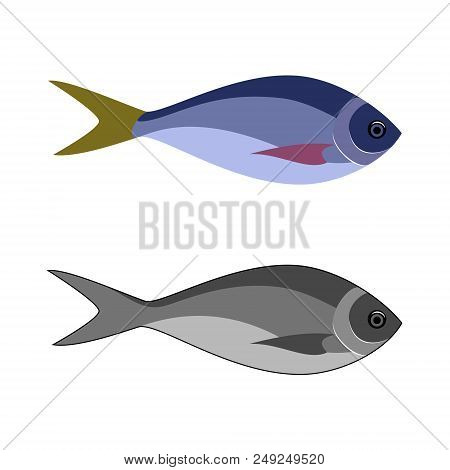 Fish Logo. Sea And Ocean Fish Icon Of Tuna, Salmon, Cod, Bass, Bream, Mackerel, Anchovy, Sardine, Ha