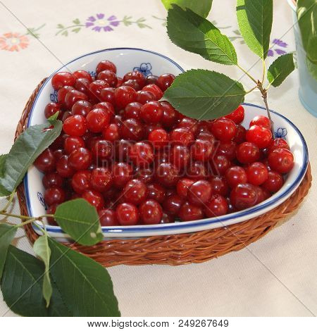 Fresh Cherries Straight From The Tree In Heartshaped Low Bowl In Wicker Basket