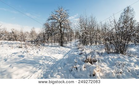 Parken Trees In Winter, Covered With Snow; Winter Landscape On Sunny Day