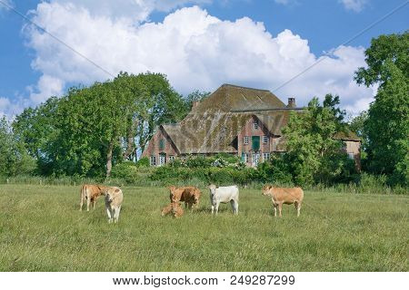 Traditional Farmhouse On Eiderstedt Peninsula In North Frisia At North Sea,schleswig-holstein,german